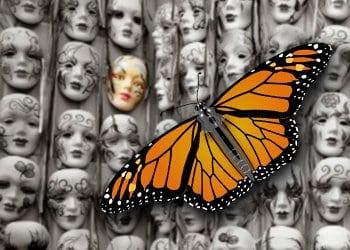 Dette billede har en tom ALT-egenskab (billedbeskrivelse). Filnavnet er monarch.jpg